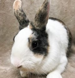 Tags rabbit rescue Archive | F U R [ Friends of Unwanted