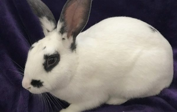 Available For Adoption | F U R [ Friends of Unwanted Rabbits ]