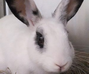 Tags house rabbit Archive | F U R [ Friends of Unwanted