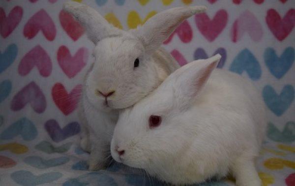 Buddy & Tomiko