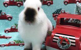wile e wabbit a