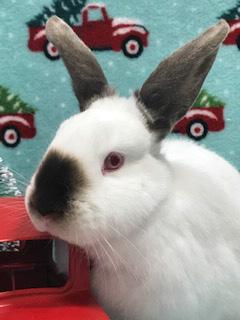wile e wabbit c