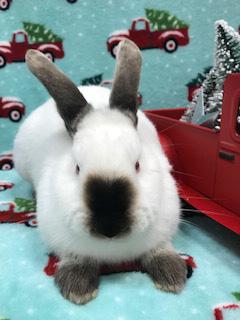 wile e wabbit d