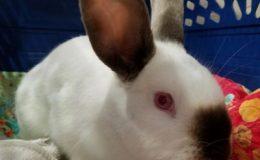 wile e wabbit