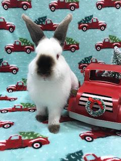 wile e wabbit g