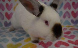 wile e wabbit heart c web