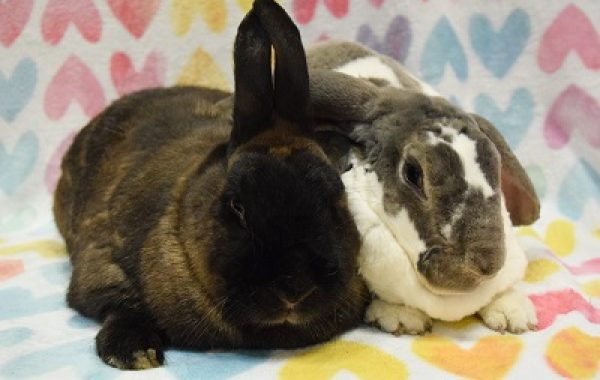 Marshmallow & Coco