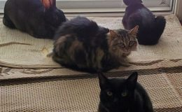 melanie with kitties