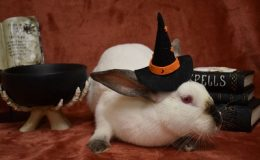 kendra halloween i w
