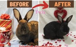 twix before and after